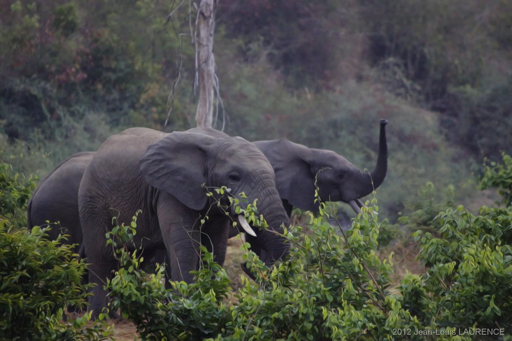 Petit déjeuner des éléphants. Parc W Bénin